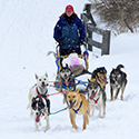 Dogs pulling sled through snow.